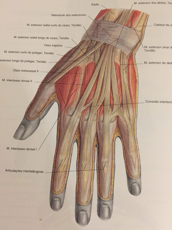 alongamentos para aliviar dores nos punhos